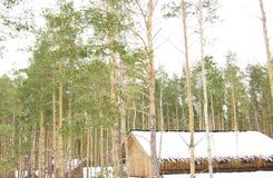 Древесины в зиме Стоковое Изображение RF