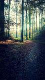 Древесины в падении Стоковая Фотография