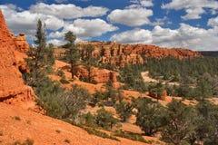 древесины глины coniferous красные Стоковое Изображение RF
