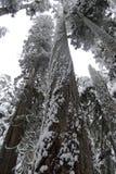 древесины держателя более ненастные Стоковое фото RF