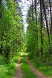 древесины дороги Стоковые Изображения