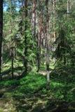 Древесины лета Стоковое Изображение RF