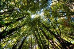 древесины захода солнца Стоковые Изображения RF