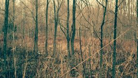 Древесины звероловства Мичигана мирные стоковая фотография rf