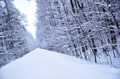 древесины зимы дороги Стоковое Фото