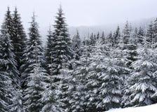 Древесины зимы покрытые с снегом Стоковые Изображения RF