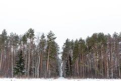 Древесины зимы, Россия Стоковые Фото