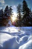 древесины зимы Стоковое Изображение RF