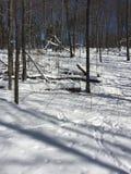 Древесины зимы Стоковые Изображения RF