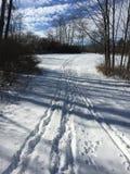 Древесины зим Стоковые Изображения RF