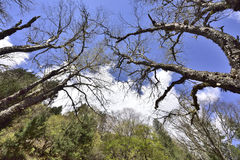 Древесины и пейзаж облаков белизны голубого неба Стоковые Изображения RF
