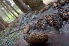 древесины конусов предпосылки Стоковое Изображение RF