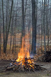 древесины костра Стоковое Изображение RF