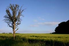 древесины края Стоковая Фотография RF