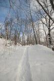 Древесины на солнечный день в парке в зиме Стоковое Изображение RF