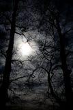 Древесины ночи Стоковые Фото