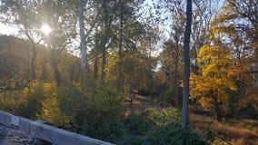 Древесины Нью-Йорка стоковое изображение