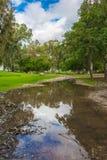 Древесины озера весной стоковые изображения
