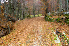 древесины осеней Стоковые Изображения RF