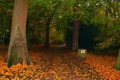 Древесины осени в лесе Лондоне Highgate Великобритании Highgate Стоковая Фотография RF
