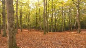 Древесины осени Стоковые Фотографии RF