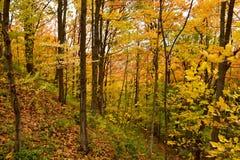 Древесины осенью Стоковое фото RF