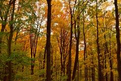 Древесины осенью Стоковая Фотография