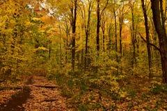 Древесины осенью Стоковые Фото
