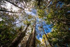 Древесины отверстия аллигатора Стоковые Изображения