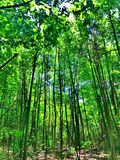 Древесины парка штата пруда заусенца стоковое фото