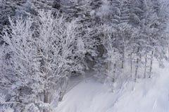 Древесины покрытые с hoar под подъемом лыжи Стоковая Фотография RF
