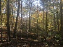 Древесины после полудня Стоковые Фото