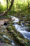 древесины потока Стоковые Фото
