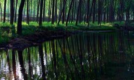 древесины потока backlight стоковые фото