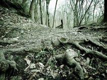 Древесины призрака стоковое изображение