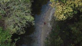 древесины прогулки сток-видео