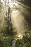 древесины путя Стоковые Изображения