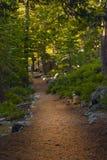 древесины путя стоковое фото