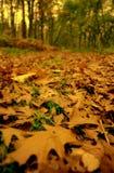 древесины сегодни вечером Стоковое Изображение