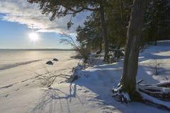 Древесины сосны в зиме Стоковое Фото