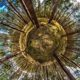 Древесины сосны Стоковые Изображения