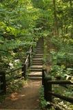 древесины тропки шага стоковые изображения