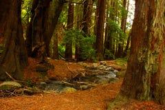 древесины тропки Стоковые Изображения RF