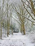 древесины тропы Стоковые Фотографии RF