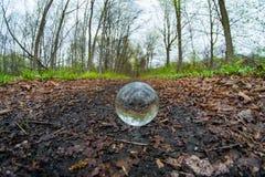 Древесины хрустального шара Стоковое фото RF