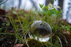 Древесины хрустального шара Стоковое Изображение RF