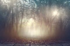Древесины штиля туманные пугающие с теплой светлой предпосылкой Стоковые Фото