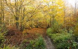 Древесины Bencroft в осени в Хартфордшире, Великобритании Стоковое фото RF