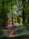 Древесины Bluebell Стоковые Фото