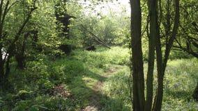Древесины Chieveley Стоковое Изображение